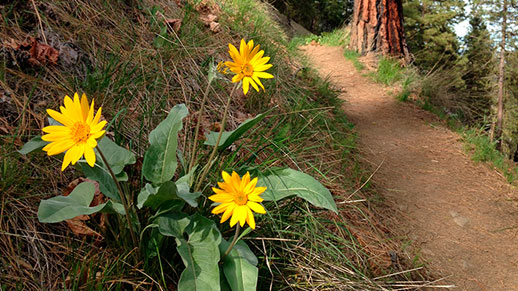 Forest trail and wildflowers