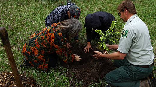four people planting a small spruce tree