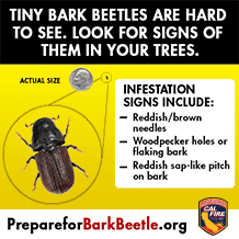 Look for signs of bark beetle in your trees.