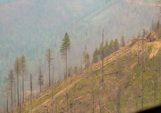 Salvage logging in the Westside Fire Recovery Project