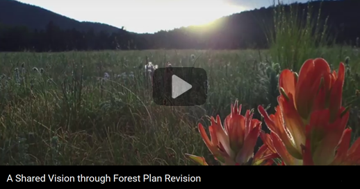 A Shared Vision through Forest Plan Revision