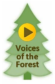 "This graphic shows a tree logo that was developed for the ""Voices of the Forest"" Project"
