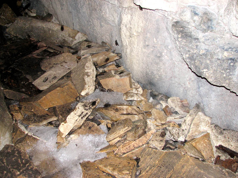 cave floor is littered with dead bats