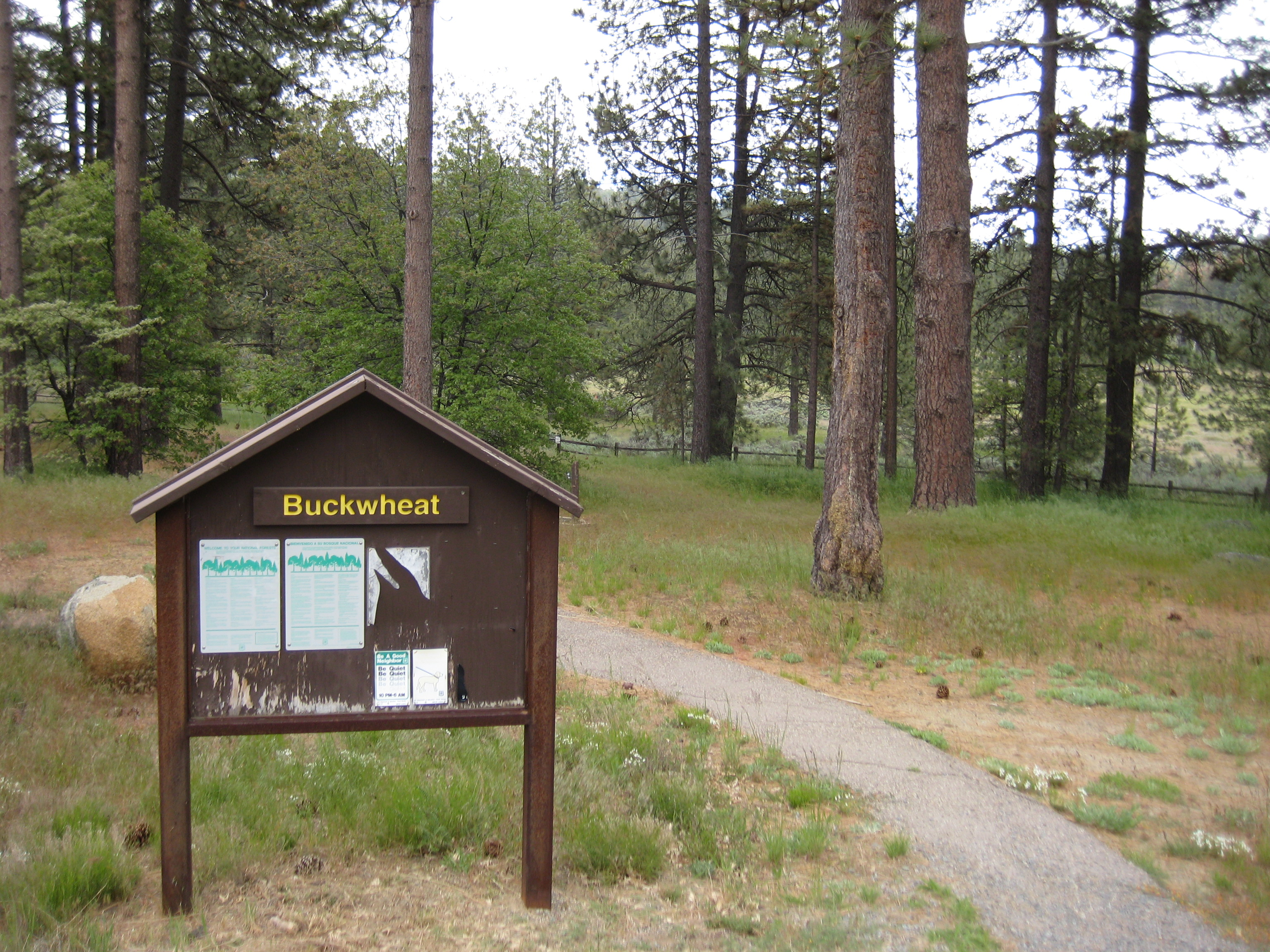 Cleveland National Forest - El Prado Group Campground - Buckwheat