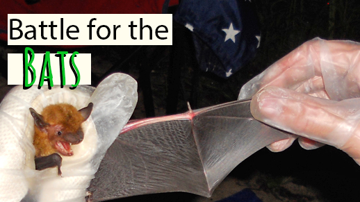 Help save the bats!