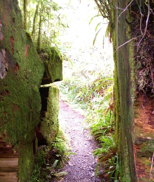 Gatton Creek Trail travels through temperate rainforest and greenery