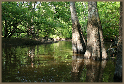 A tree-lined river in the Kisatchie National Forest