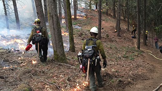 Forest service firefighters conduct a prescribed burn.