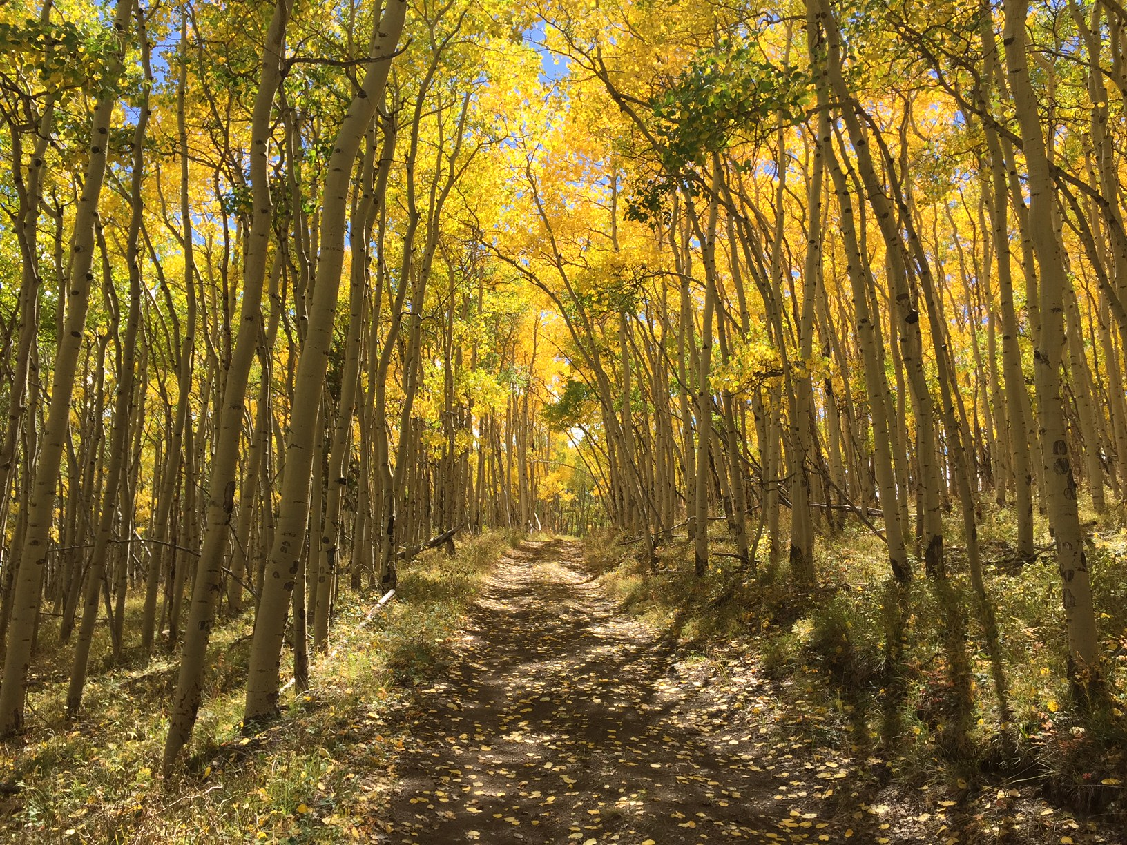 2016 Fall Colors on Salida Ranger District