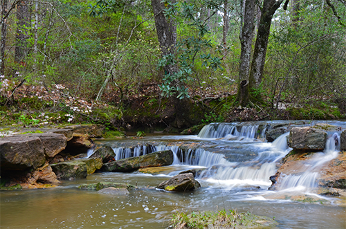 Beautiful waterfall in the wooded Kisatchie Bayou