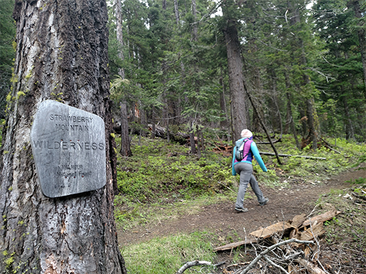 Young Women hiking up Strawberry Basin Trail. A Wilderness boundary sign rests against a large tree