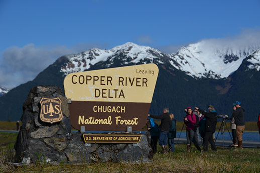 A group of birders stand near the Copper River Delta FS sign