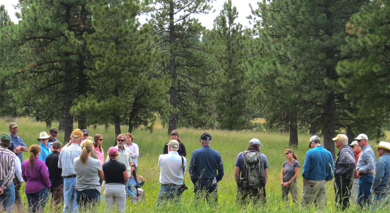 A group stands in a circle under pine trees discussing the management of the Blue Mountains Forests