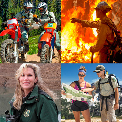 Forest Service employees montage