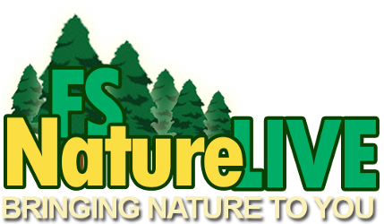 Welcome to our FSNatureLIVE distance learning adventures!