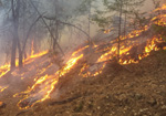 Reducing hazardous fuels with prescribed fire