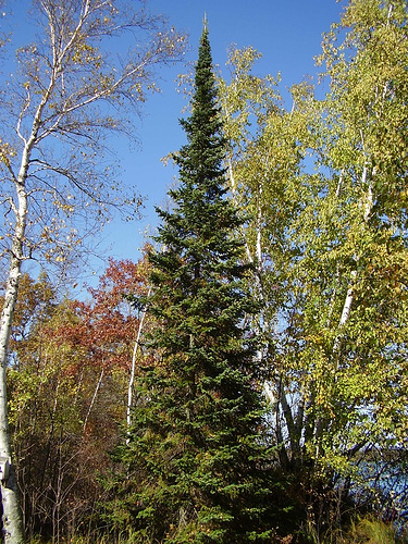 2018 Heber-Kamas Christmas Tree Cutting - Uinta-Wasatch-Cache National Forest - News & Events