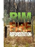 Rim Fire Reforestation