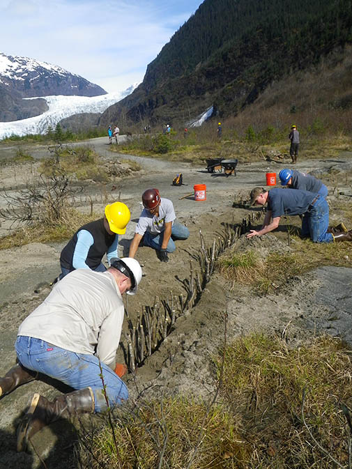 Trout Unlimited volunteers Juneau Chapter, plant willow cuttings in a trench to define stream, trail