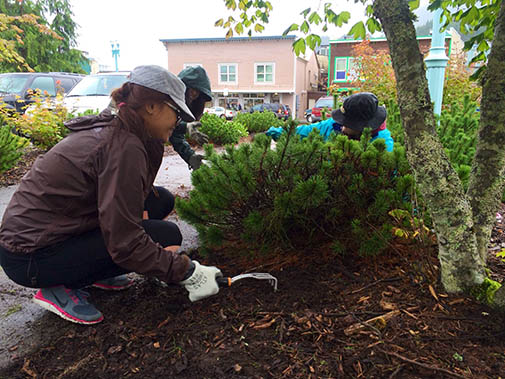 Volunteers at the Southeast Alaska Discovery Center clean up the planting beds