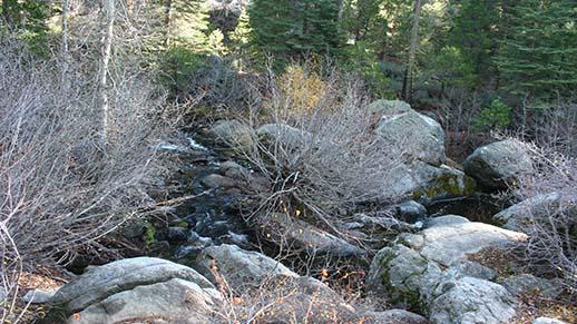 Cascade Creek Campground Stream