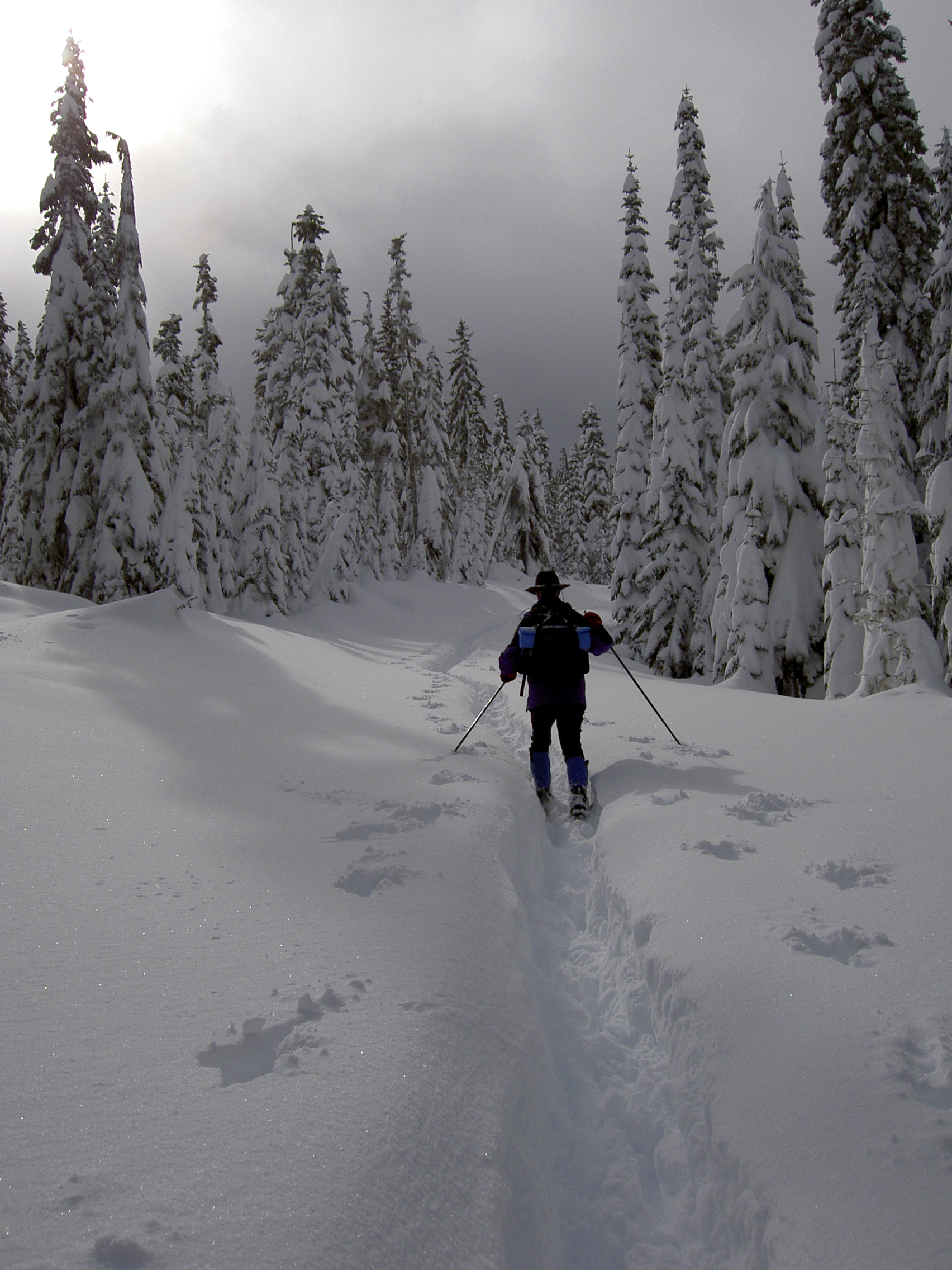 A person on snowshoes travels a path through deep snow surrounded by snow covered trees