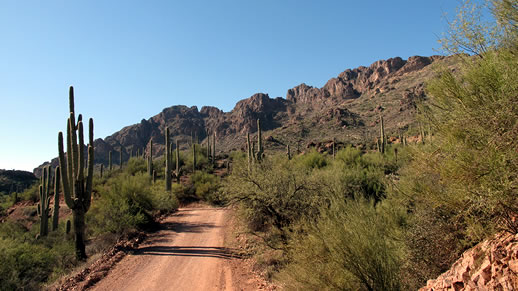 desert road with saguaro cacti lining it