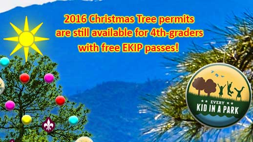 Click photo for info about Christmas Tree Permits Available for 4th graders and their guests