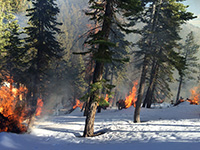 Pile Burning Clear Creek