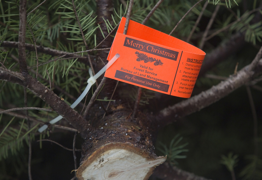 Christmas Tree permit