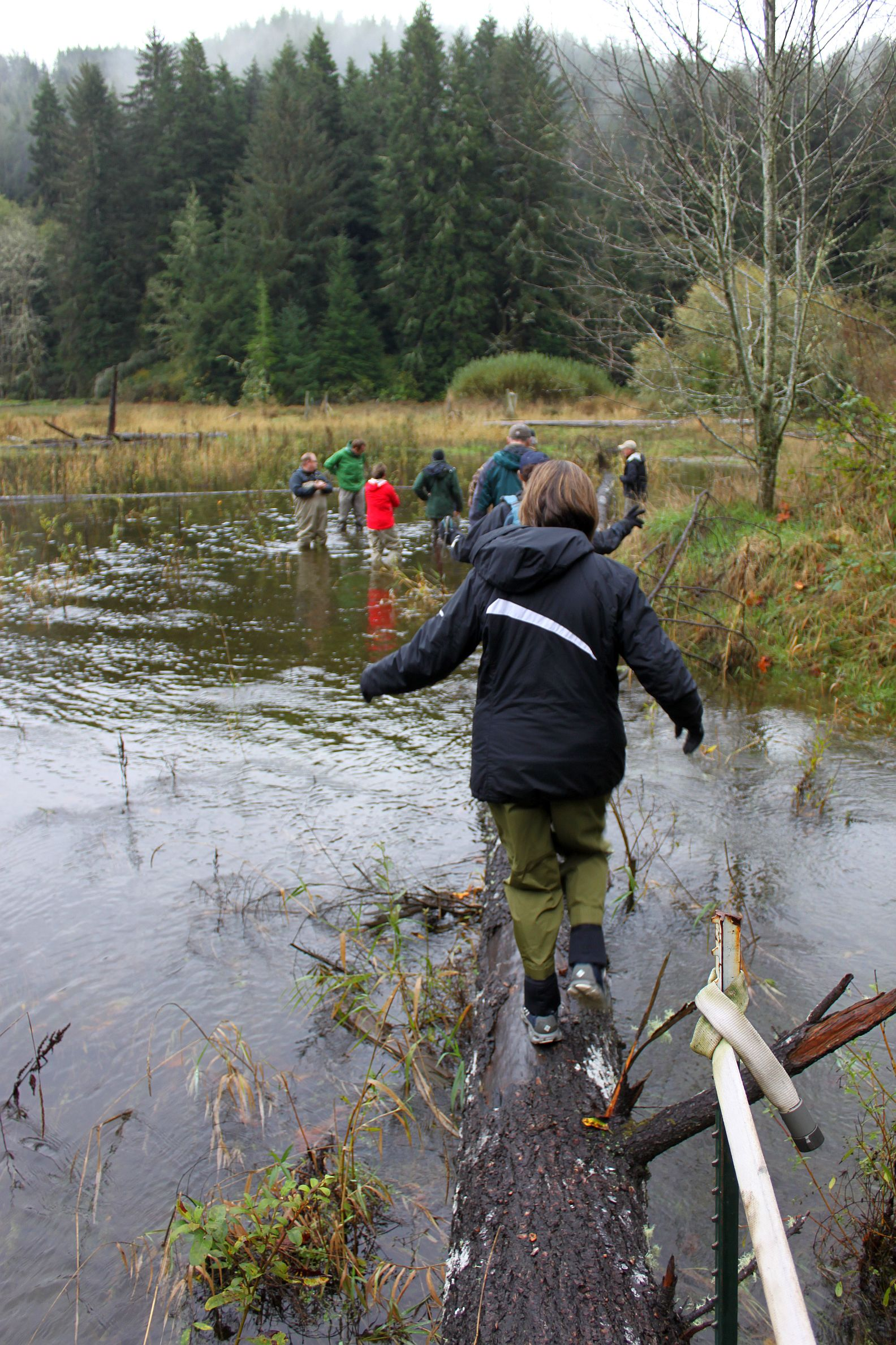 A group of people walking along a log and through a flooded area in the Five-Mile Bell floodplain