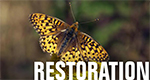 A link that takes you to restoration projects on the Siuslaw National Forest. IMAGE: A Oregon Silverspot butterfly