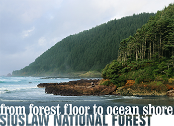 A link that takes you to learn more about the Siuslaw National Forest