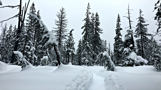 Snowshoeing on a wintry day