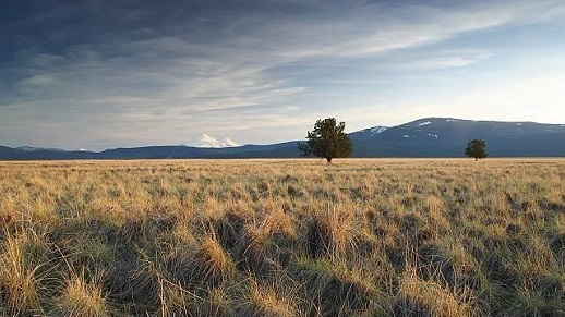 Grassy landscape with two lone trees with a mountain in the background