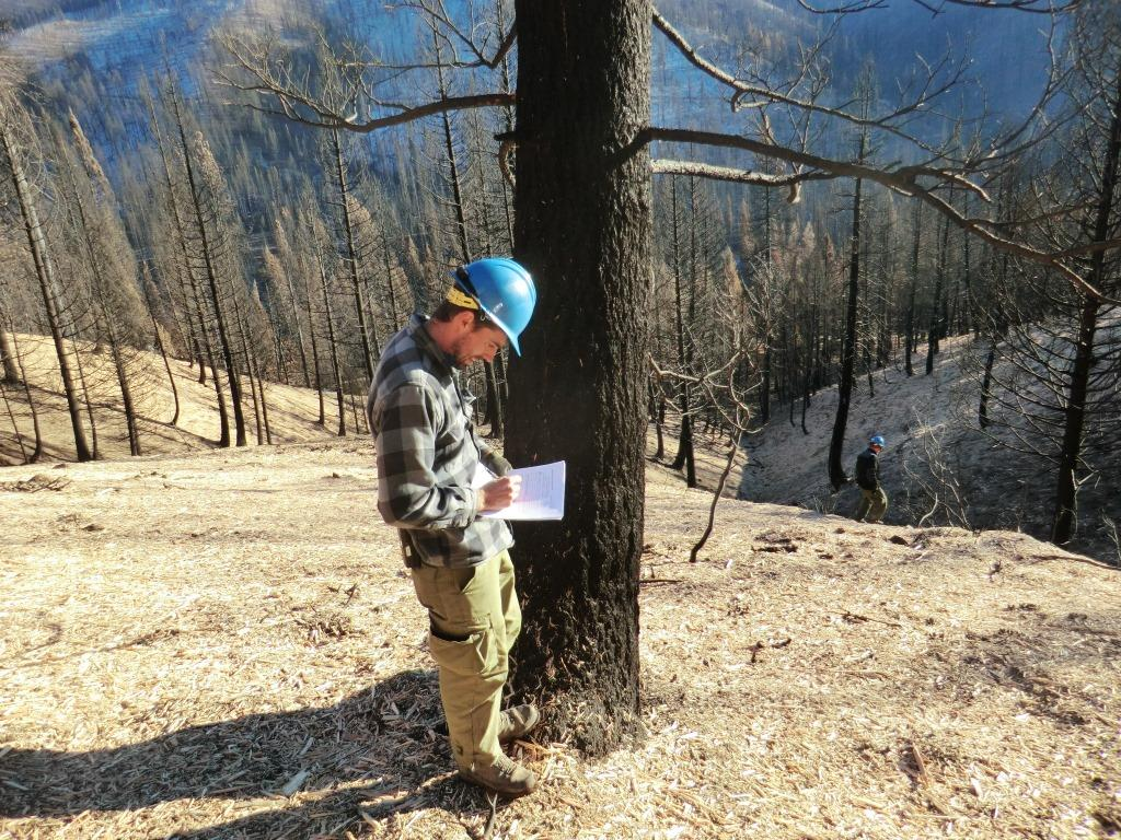 Photo of employee taking notes in burned area with ground covered in mulch
