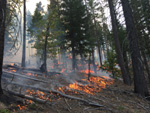 Photo of fire on the Mendocino National Forest