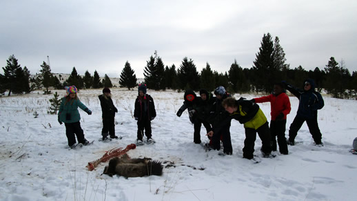Children examining carcass remains