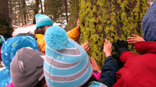 Children examining moss on tree