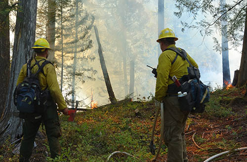 Two firefighters face a blaze with smoke in the forest