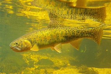 Freshwater fish depend on clean water.