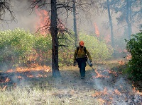 Firefighter lighting a prescribed burn