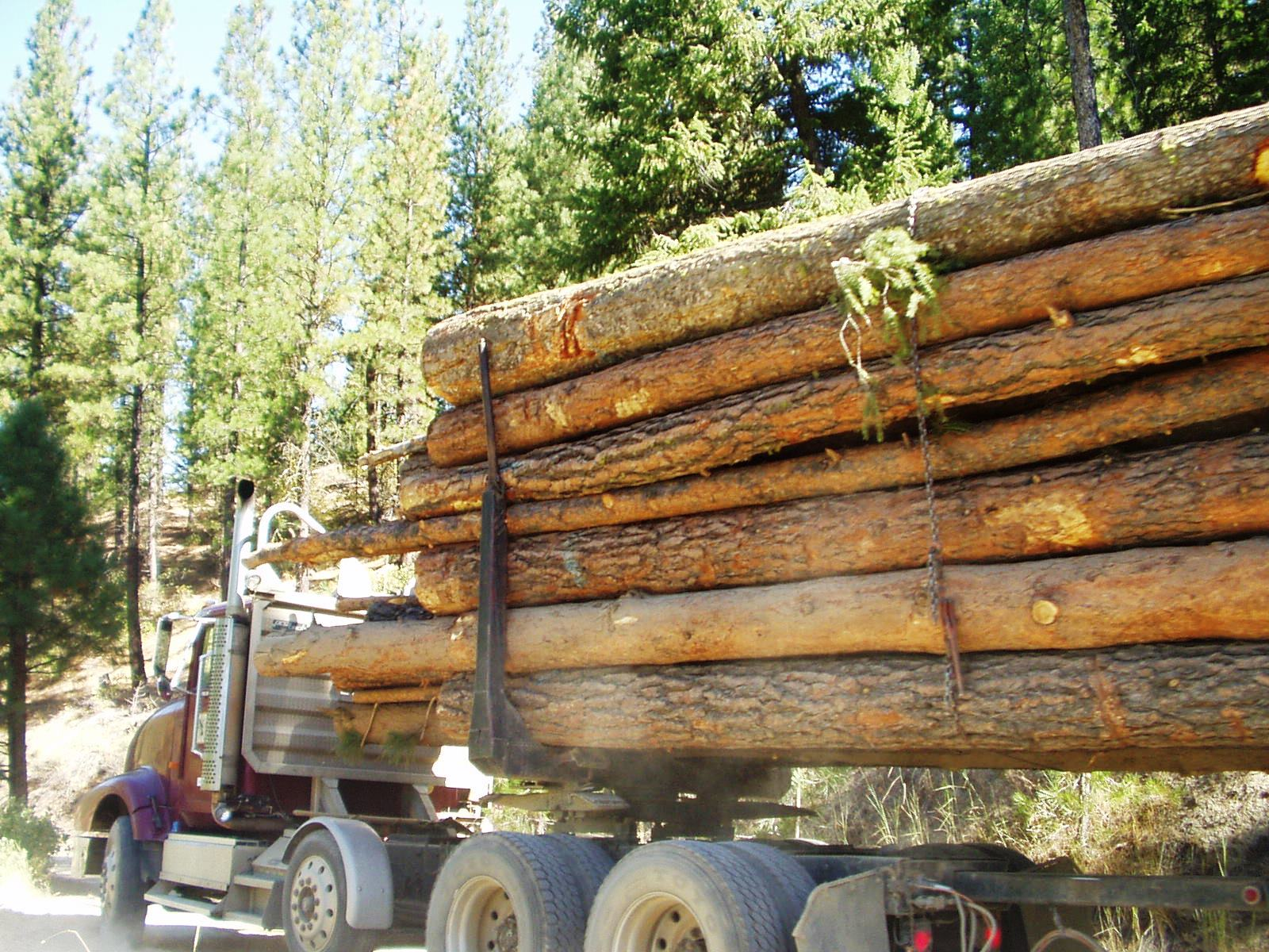 Photo of a logging truck on State Highway 55