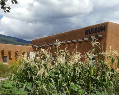 Corn in front of the Tijeras Museum