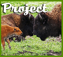 Bison Project Icon