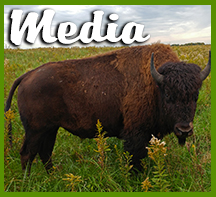 Bison in the Media icon