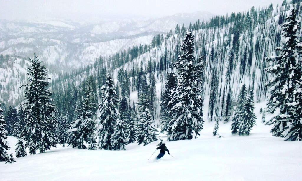 Photo of a single skiier in trees