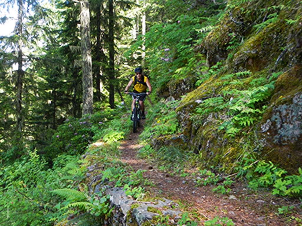 A person rides a mountain bike down a single track trail