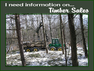 Timber Sale Information