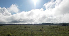A warn sun cuts through puffy clouds that hang over an open expanse of grass.